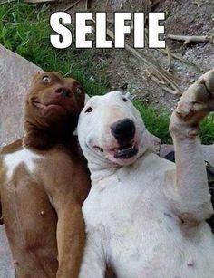 Funny Animal Memes The Maarte Kid